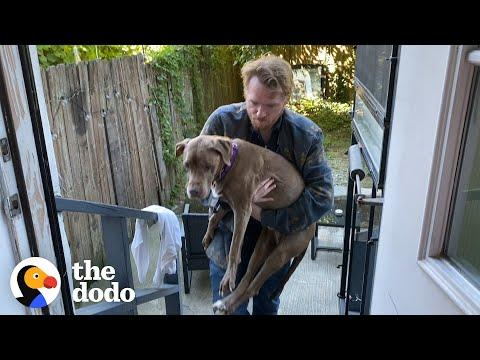 17-Year-Old Dog Wakes Her Foster Dad Up For Walks Every Morning Video