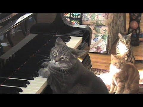 CATcerto. ORIGINAL PERFORMANCE VIDEO. Mindaugas Piecaitis, Nora The Piano Cat