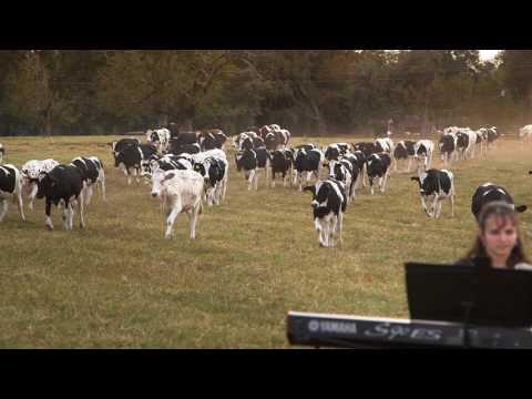 Dairy Farmer Holds Concert for Dairy Cows But Will The Cows Come Home?