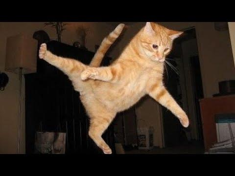 Flying Cats Compilation