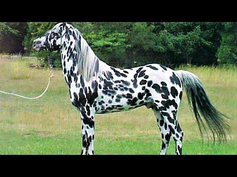 10 Beautifully Colored Rare Horse Breeds