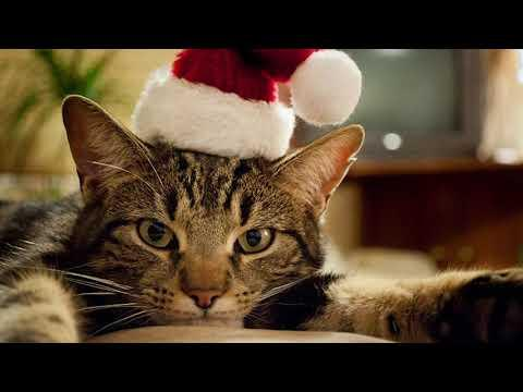 Ray Stevens - Claws (A Cat's Letter To Santa) (Official Audio)