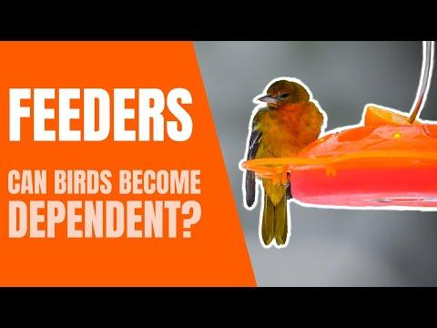 Can Birds Become Dependent on Feeders? #Video