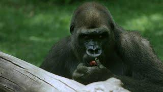 Keeping Animals Well Fed at the Bronx Zoo
