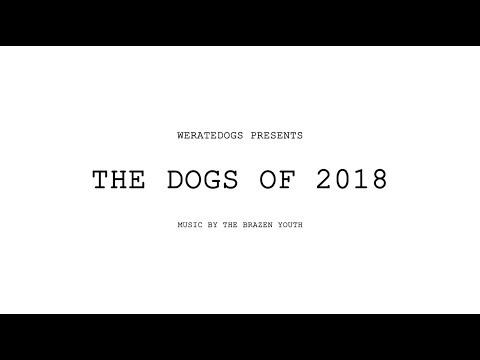 The Coolest, Most Amazing Dogs of 2018