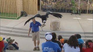 Birdman (Texas Country Reporter)