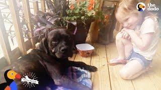 Stray Dog Shows Up on Couple's Porch And Changes Their Mind About Dogs   The Dodo Pittie Nation
