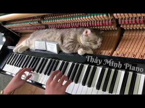 Piano woogie boogie massages for meow #Video