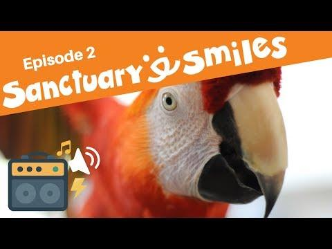 Dance like nobody's watching - ducks tap, goldfish bop, parrots hip-hop in Sanctuary Smiles Ep 2