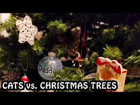 Cats vs. Christmas Trees Compilation 2018