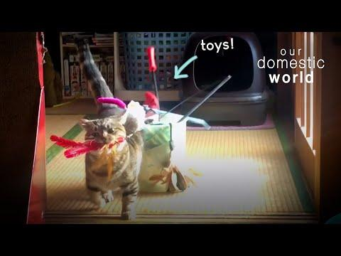Watch These Pets Party In The Play Room Video