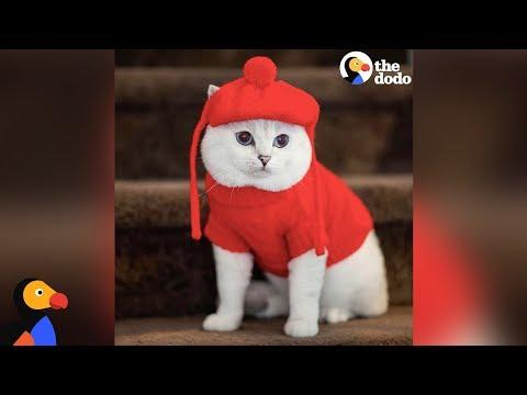 This Cat Is A Supermodel - WHITE COFFEE CAT