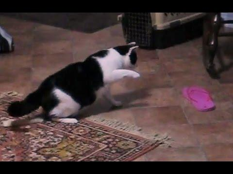 Cats Vs. Flip Flops Compilation