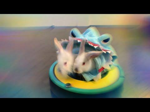 Double 2-Headed Rabbit Shark on Roomba Video #SharkWeek
