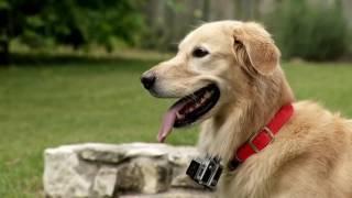 Huck the Roof Dog is a social media sensation