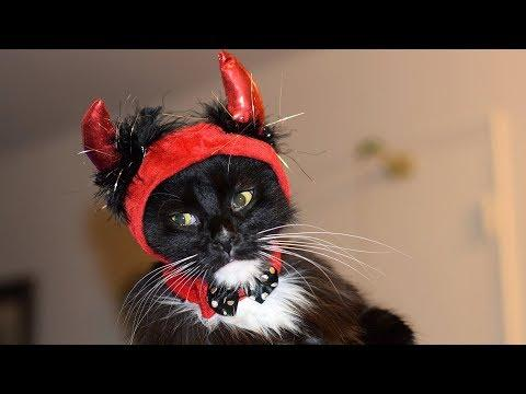 Funny Cats in Ridiculously Cute Costumes Compilation (2018)