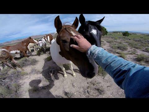 Wild Mustangs - A Legacy In 4K