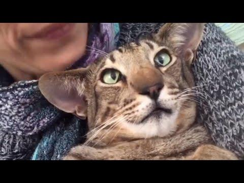 After nearly losing his life, cat now won't stop talking #Video