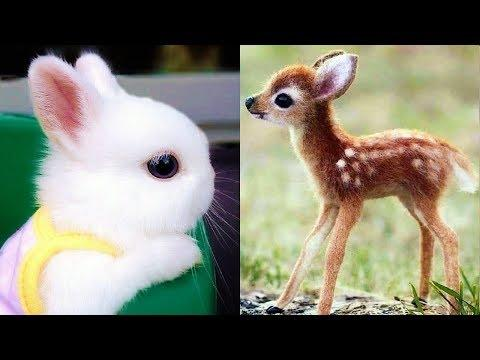 Baby Animals - Cute Baby Animal Videos - Funny Baby Animals Video - Funny Babies Videos