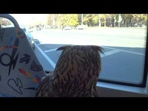 Owl Takes The Tram