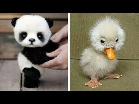 Cute baby animals Videos Compilation cutest moment of the animals - Soo Cute! #13