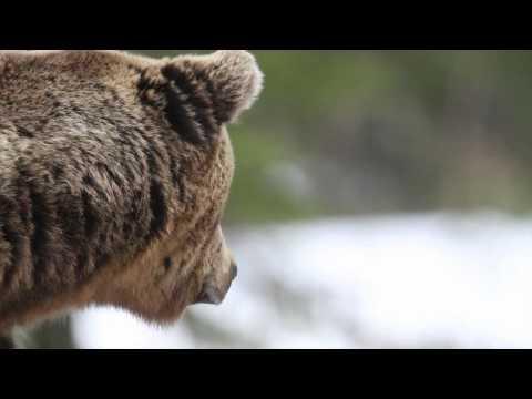 Wild December - HD 1080p