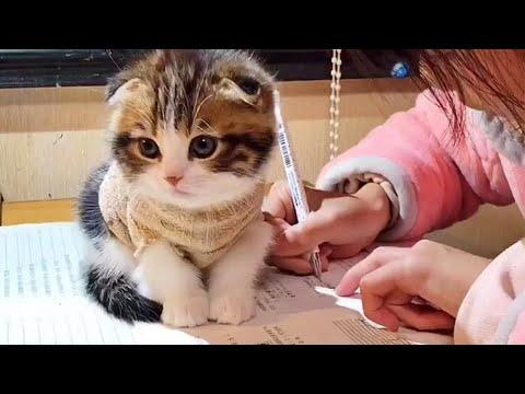 Cute Kitty Makes Homework Difficult to Do Video