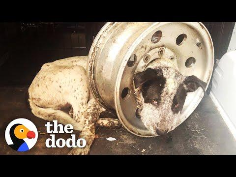 Dog Is Freed From Giant Tire Rim On His Head Video
