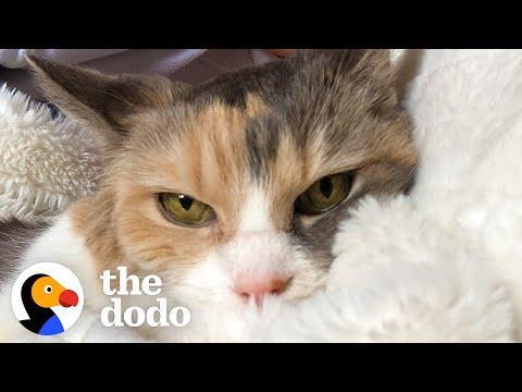 Woman Adopts Grandparents' Grumpy Cat #Video