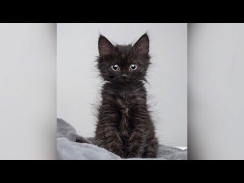 Woman saves life of tiny kitten abandoned by mom #Video
