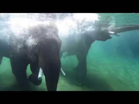 Elephants Have a Pool Party