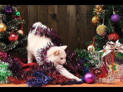 FUNNY Cat Videos Naughty Cats Vs Christmas Trees Compilation