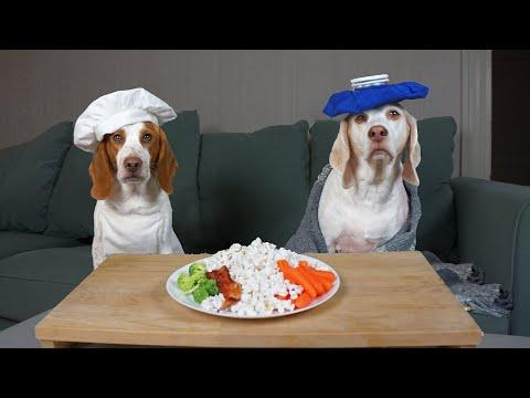 Dog Makes Food for Sick Friend: Chef Dog Potpie Cooks Maymo's Favorite Foods After Surgery!