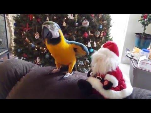 Parrot Attacks Santa