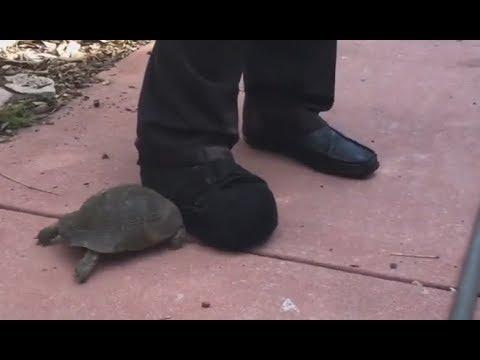 Tortoise vs. Shoe - Your Daily Dose Of Internet
