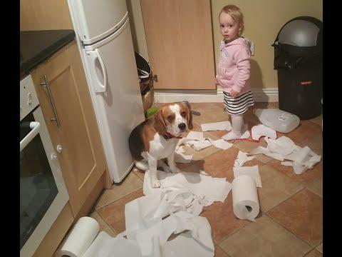 CharlieDaDog - Dog And Baby Do Clean Up