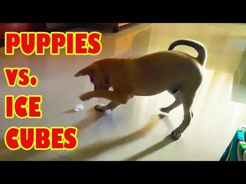 Puppies vs. Ice Cubes Video (2020)