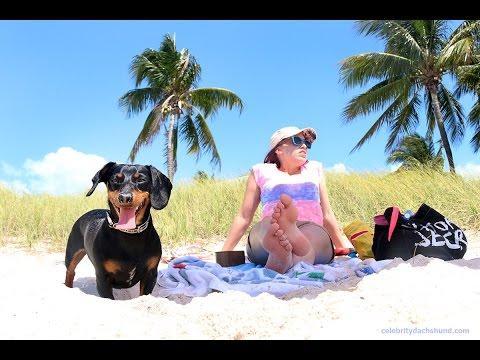Crusoe's Dog-Friendly Florida Vacation