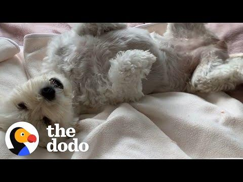Rescue Dog Too Scared To Fall Asleep Is So Happy Now Video
