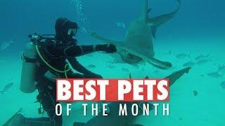 Best Pets of the Week | June 2018 Week 4