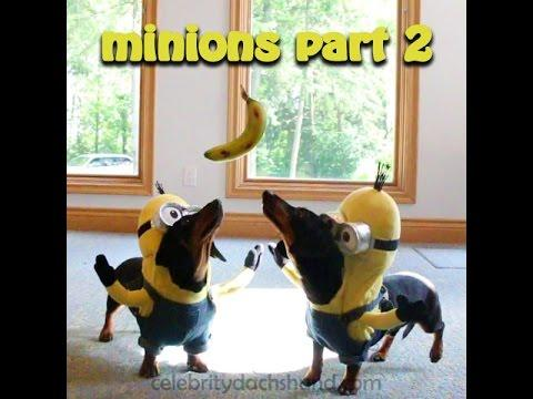 Wiener Dog Minions PART 2 - BA-NA-NA!