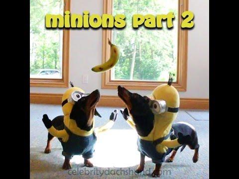 Wiener Dog Minions PART 2 - BA-NA-NA!