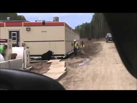 Guy Out Runs Bear While Coworkers Become Hysterical