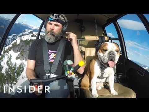 Adventurous Bulldog Is A Helicopter Copilot