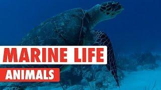 Majestic Marine Life Animals