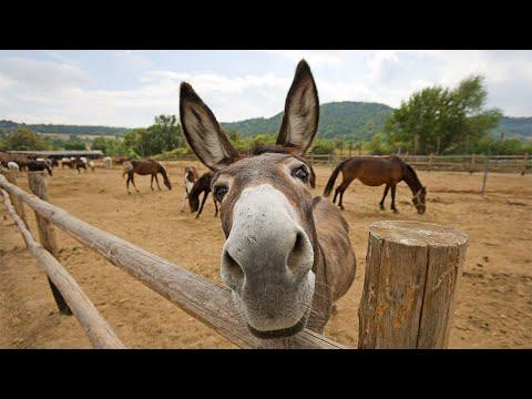 Funny Cute Donkey Compilation #Video