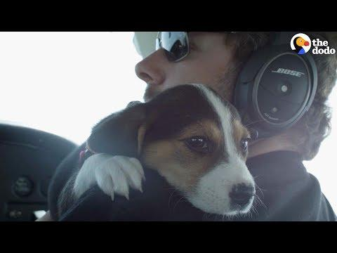 Pilots Help Dogs Find Forever Homes