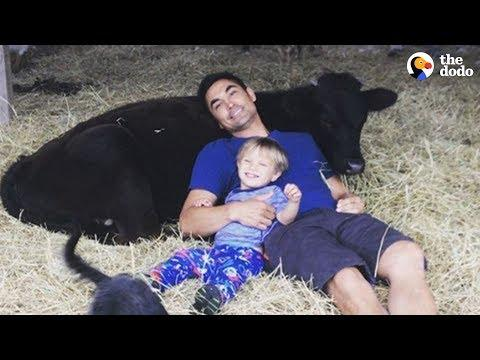 Rescued Calf And Little Boy Grow Up Together | The Dodo