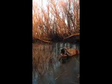 Friend Laughs Hysterically As Man Struggles To Crawl Across Thin Ice On River
