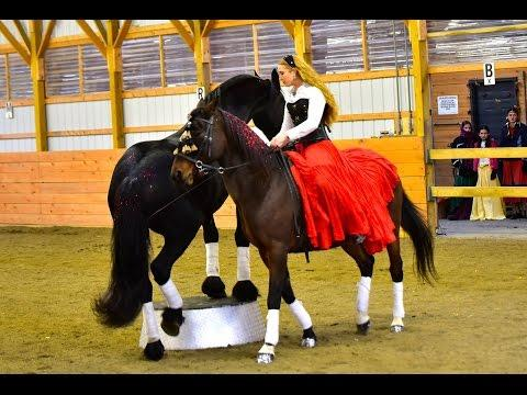Sway Routine - Bitless Dressage On Andalusian - Liberty With A Friesian